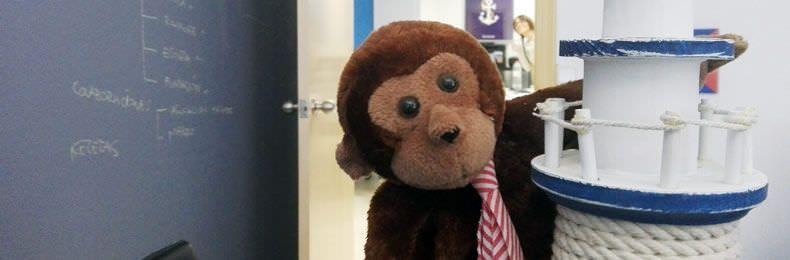 monkey es experto en seo branding